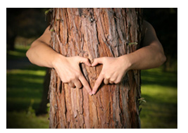 heart shaped hands on tree